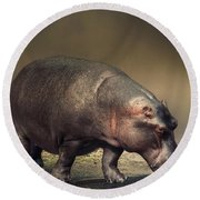 Round Beach Towel featuring the photograph Hippo by Charuhas Images