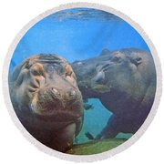 Hippos In Love Round Beach Towel