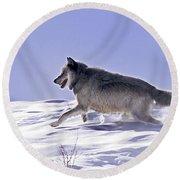 His Majesty Wolf 21m Round Beach Towel