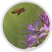 Honey Bee At Work Round Beach Towel