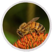Honey Bee On Flower Three Round Beach Towel by Randy Steele