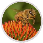 Honey Bee On Flower Two Round Beach Towel by Randy Steele