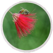 Honey Bee Round Beach Towel by Tam Ryan