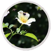 Honey Bees In Flight Over White Rose Round Beach Towel