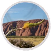 Round Beach Towel featuring the photograph Honey Grevillea 01 by Werner Padarin