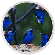 Honeycreeper Round Beach Towel by Betsy Knapp
