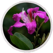 Hong Kong Orchid Round Beach Towel