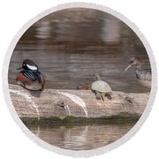 Hooded Merganser Pair Resting Dwf0175 Round Beach Towel
