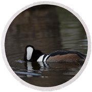Hooded Merganser Preparing To Dive Round Beach Towel