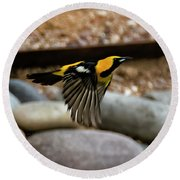Round Beach Towel featuring the photograph Hooded Oriole H37 by Mark Myhaver