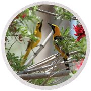 Round Beach Towel featuring the photograph 16x20 Canvas - Hooded Orioles by Tam Ryan