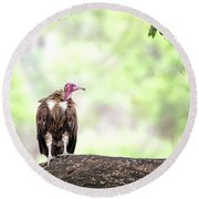 Hooded Vulture Round Beach Towel
