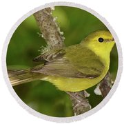 Hooded Warbler Female Round Beach Towel