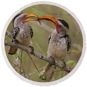 Hornbill Love Round Beach Towel by Bruce J Robinson