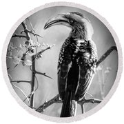 Round Beach Towel featuring the photograph Hornbill Resting by Pravine Chester