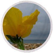 Horned Poppy By The Sea Round Beach Towel