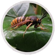 Hornet Moth Round Beach Towel