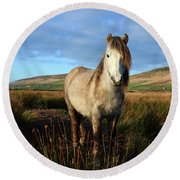 Horse Round Beach Towel by Barbara Walsh