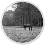 Horse In Pasture Round Beach Towel