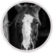 Horse Looking Through Stall Round Beach Towel