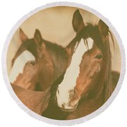 Round Beach Towel featuring the photograph Horse Portrait by Ana V Ramirez
