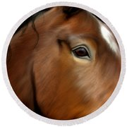 Horse Portrait Close Up Round Beach Towel