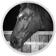 Horse Portrait Round Beach Towel by Delphimages Photo Creations