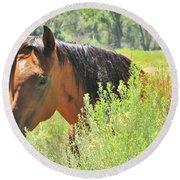 Horse Portrait Round Beach Towel by Marilyn Diaz