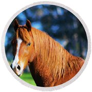 Horse Portrait  Round Beach Towel