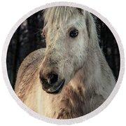 Horse Portrait Round Beach Towel