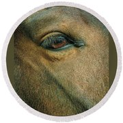 Round Beach Towel featuring the photograph Horses Eye by Bruce Carpenter