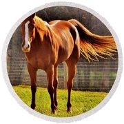 Horse's Tail Round Beach Towel