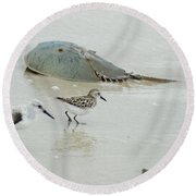 Round Beach Towel featuring the photograph Horseshoe Crab With Migrating Shorebirds by Richard Bryce and Family
