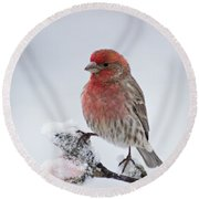 House Finch And Spring Snowfall - D010346 Round Beach Towel