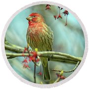Round Beach Towel featuring the photograph House Finch In Spring by Rodney Campbell