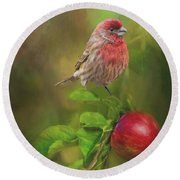 Round Beach Towel featuring the photograph House Finch On Apple Branch 2 by Janette Boyd