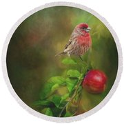 House Finch On Apple Branch Round Beach Towel