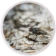 Round Beach Towel featuring the photograph House Fly by Chevy Fleet