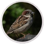 House Sparrow 2 Round Beach Towel