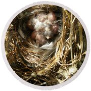 Round Beach Towel featuring the photograph House Wren Family by Angie Rea