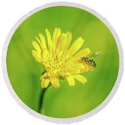 Round Beach Towel featuring the photograph Hoverfly June 2016. by Leif Sohlman