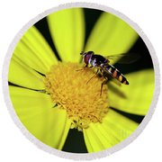 Round Beach Towel featuring the photograph Hoverfly On Bright Yellow Daisy By Kaye Menner by Kaye Menner