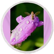 Hoverfly On Pink Flower Round Beach Towel