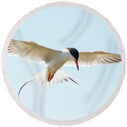Hovering Tern Round Beach Towel