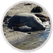 Huge Sea Turtle Round Beach Towel by Karen Nicholson