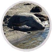 Huge Sea Turtle Round Beach Towel