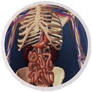 Human Skeleton Showing Kidney, Stomach Round Beach Towel