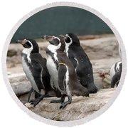 Humboldt Penguins Round Beach Towel