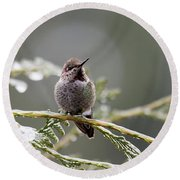 Round Beach Towel featuring the photograph Hummer On Branch 1 by Rebecca Cozart