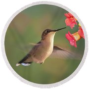 Hummer With Trumpet Vine Flowers Round Beach Towel by Judy Johnson
